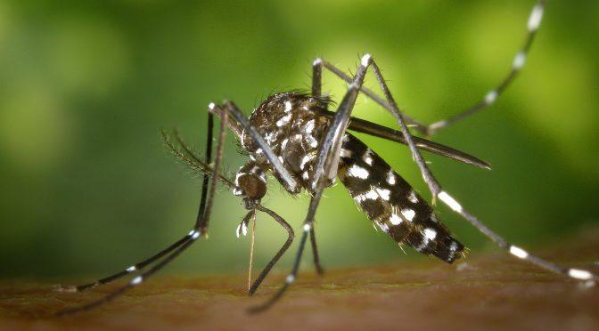 I migliori rimedi anti-zanzare per l'estate 2018