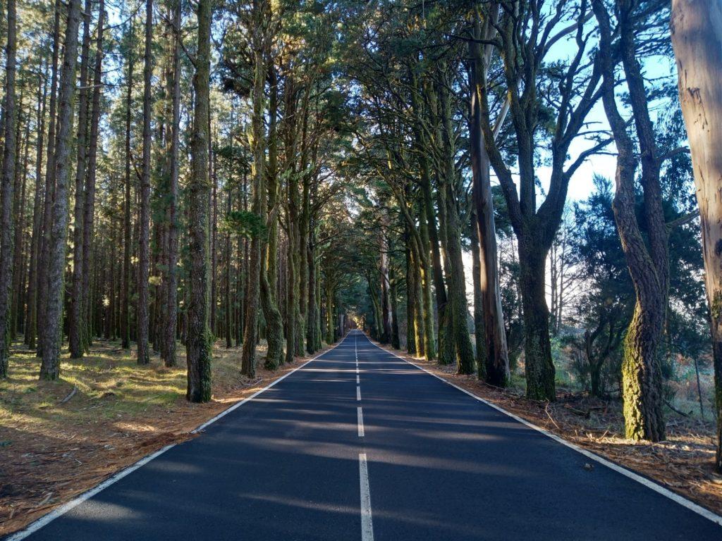 foresta teide